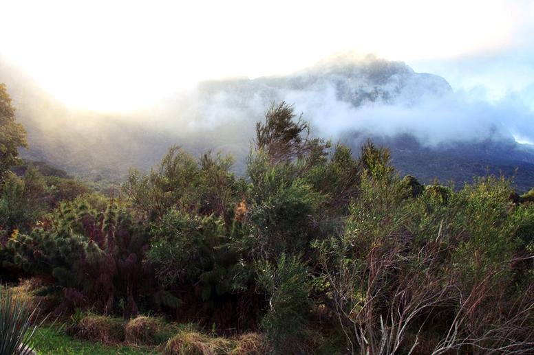 Kirstenbosch Botanical Gardens im Nebel