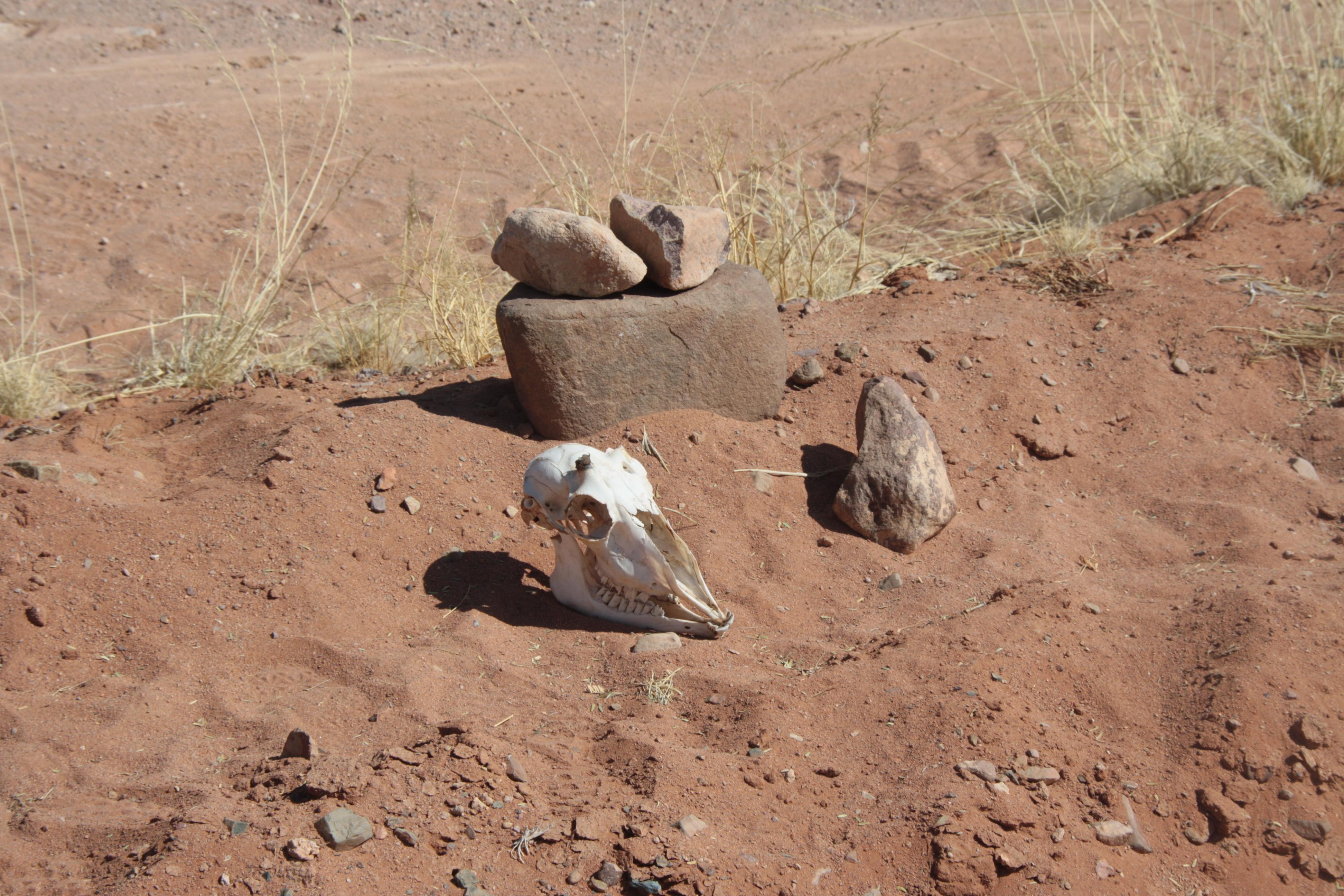 Skelett Namib Wüste Namibia