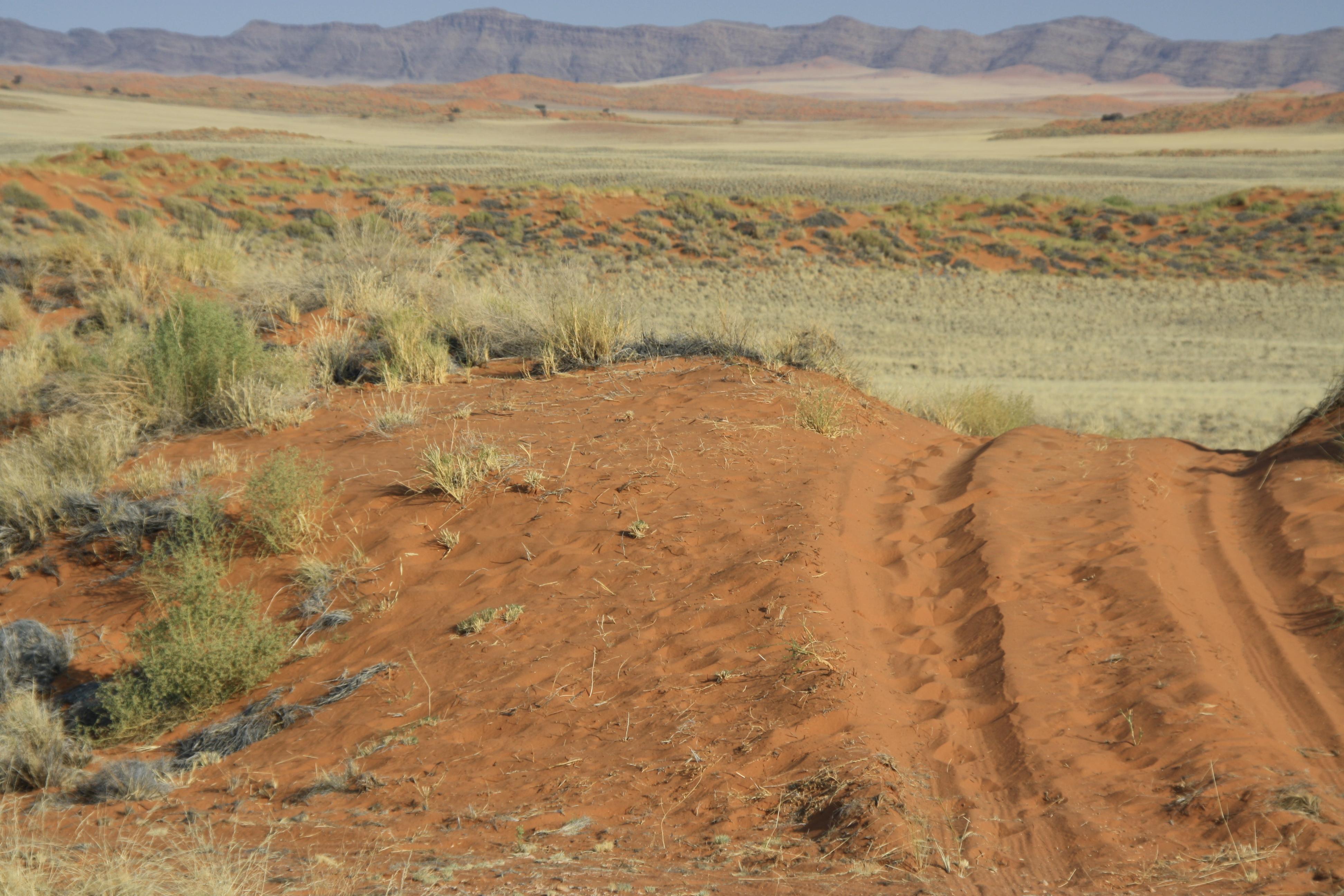 Wüste Namib Naukluft Namibia