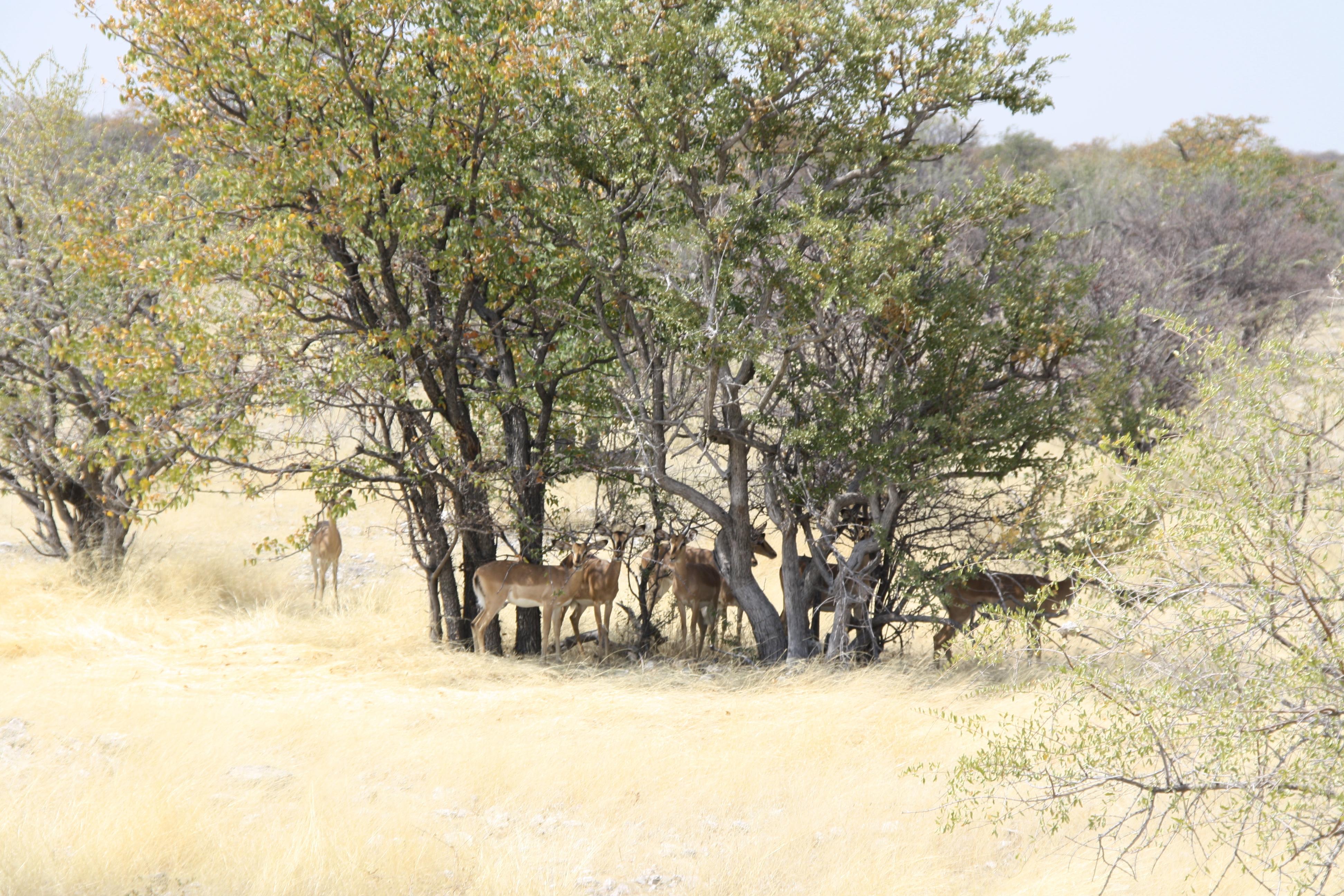 Etosha Nationalpark Namibia Sonnenschutz