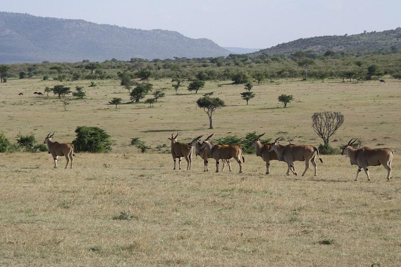 Kenia 2012 122