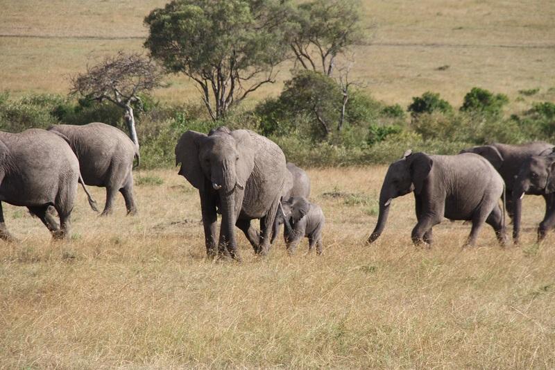 Kenia 2012 138