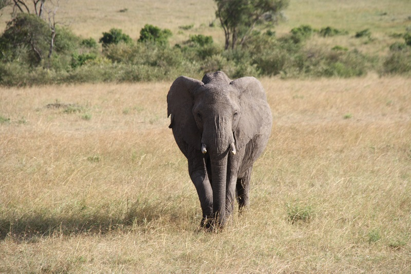 Kenia 2012 147