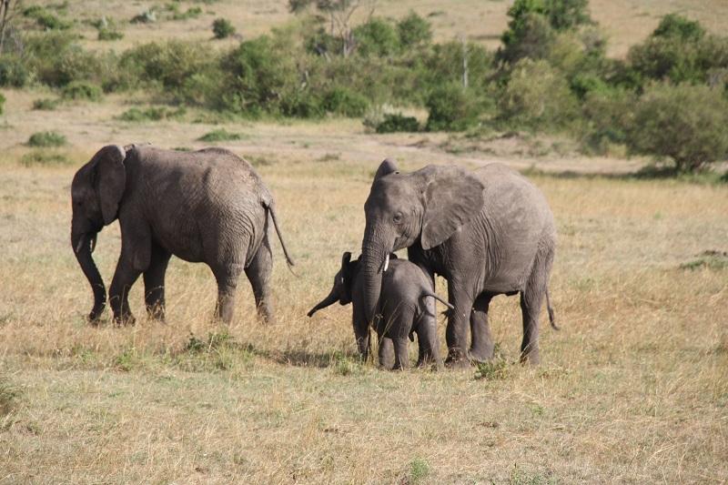 Kenia 2012 153