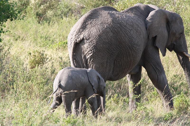 Kenia 2012 248