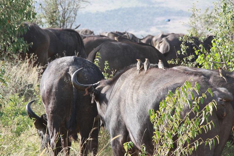 Kenia 2012 251