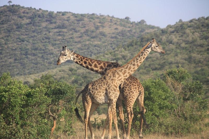 Kenia 2012 383