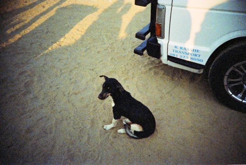 Hund in einem Township von Swakopmund