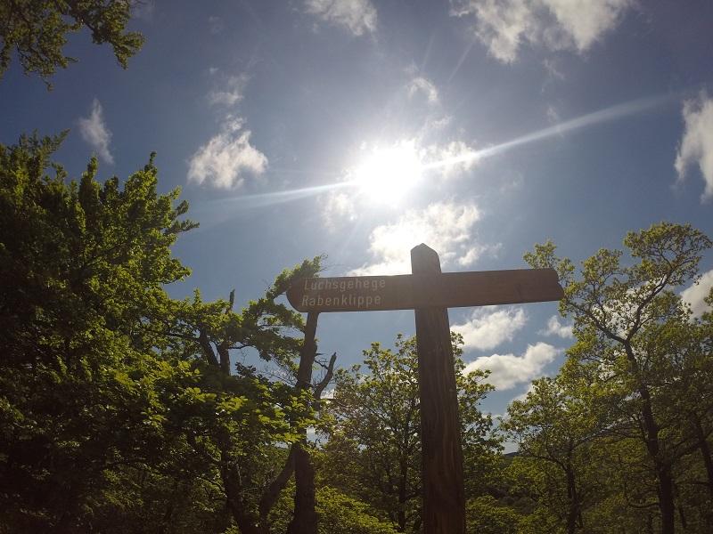Wandern Harz Luchsgehege