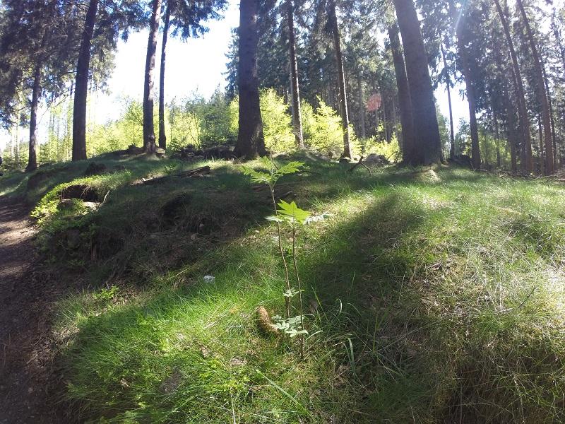 wald Harz wandern