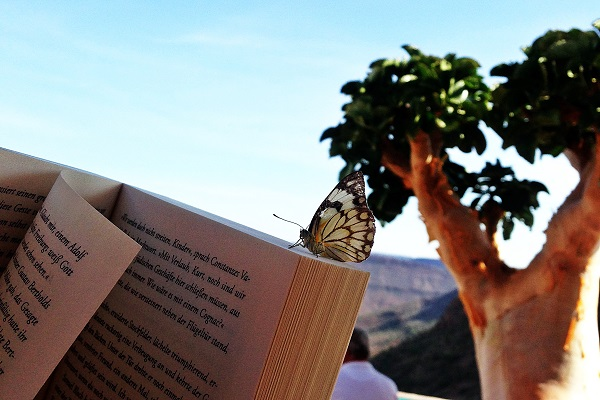 Schmetterling sitzt auf einem Buch