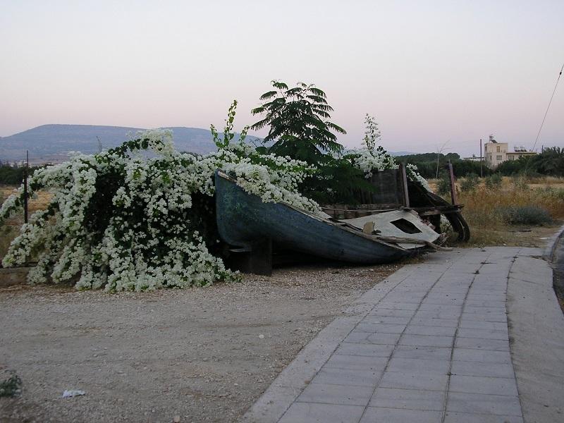 Bootswrack Zypern