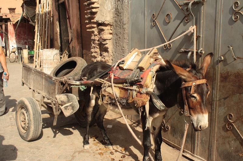 Esel Marrakech