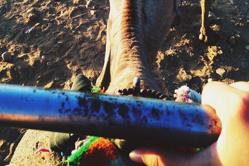 Kamelreiten in Zagora