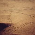 Ein Ausflug in die Wüste