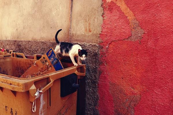 Katze, Marrakesch