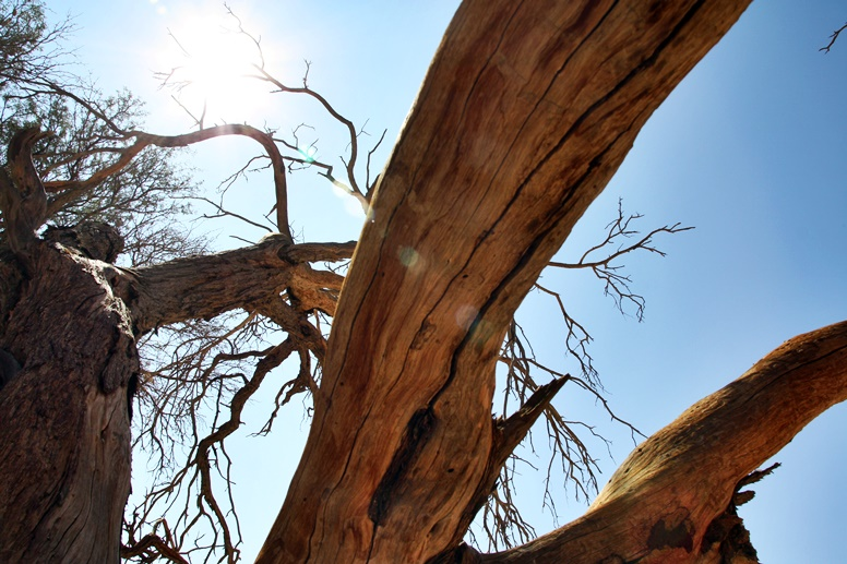 Totes Holz in der Namib Wüste in Namibia