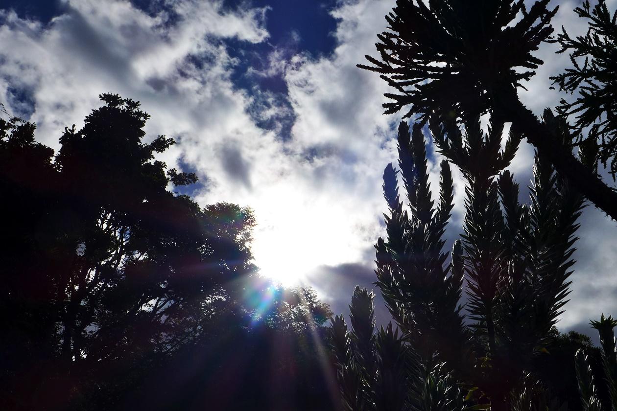 Sonnenlicht scheint durch die Pflanzen im botanischen Garten von Kapstadt