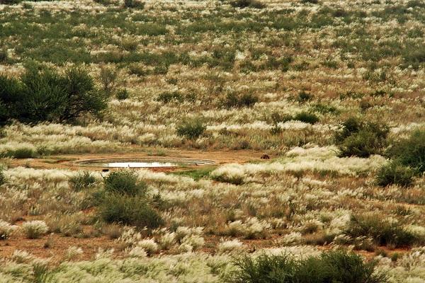 Namibia - Teufelskrallen Tented Lodge (3)