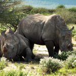 Nördlich des Wendekreis des Steinbocks – Namibia Tag für Tag Teil II