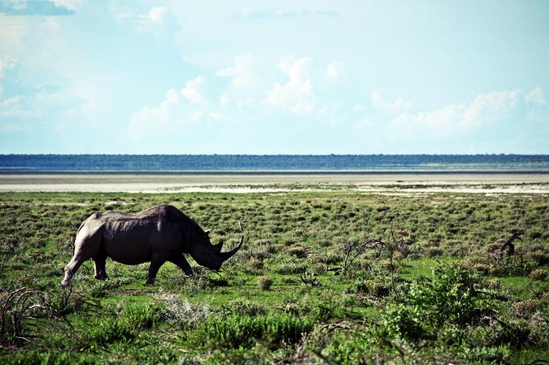 Nashorn im Etosha Nationalpark in Namibia