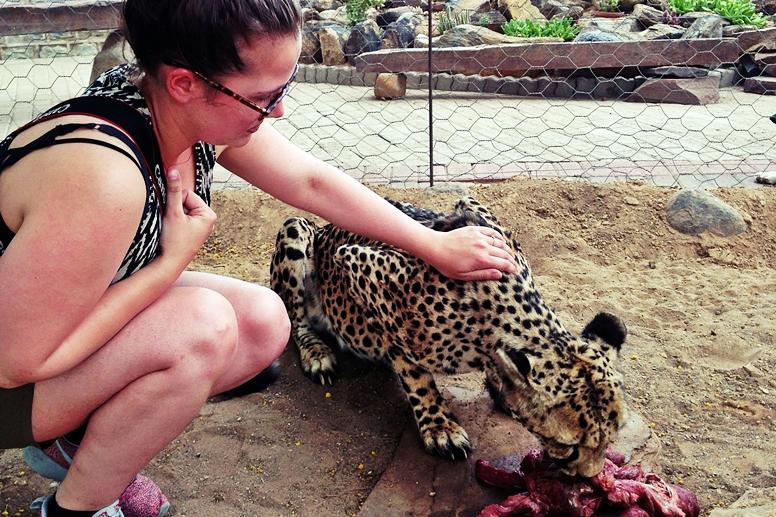 Lynn streichelt einen Geparden auf einer Farm in Namibia
