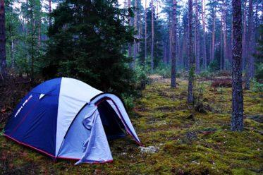 Zelt im Morgengrauen im Wald.