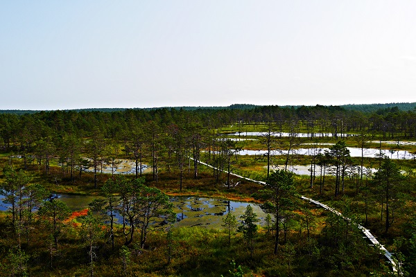 Blick über das Moor im Lahemaa Nationalpark