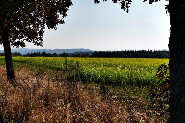 Feld am Hugenotten- und Waldenserpfad auf der Wegschleife durch das Lengeltal bei Louisendorf in Nordhessen