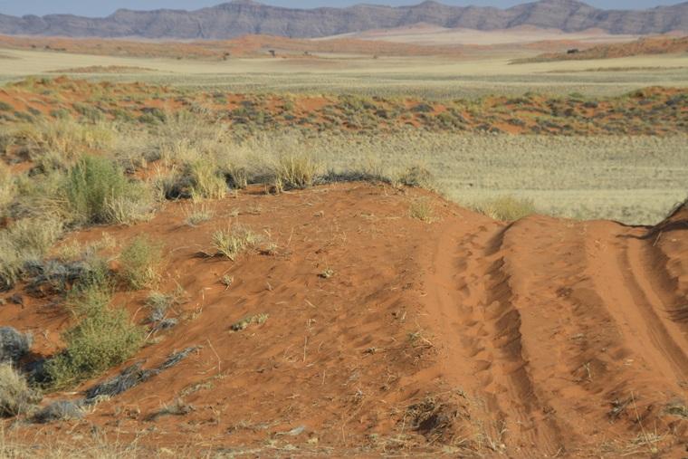 Blick über die roten Dünen des Namib Rand Nature Reserve auf einem guided Bushmans Walk