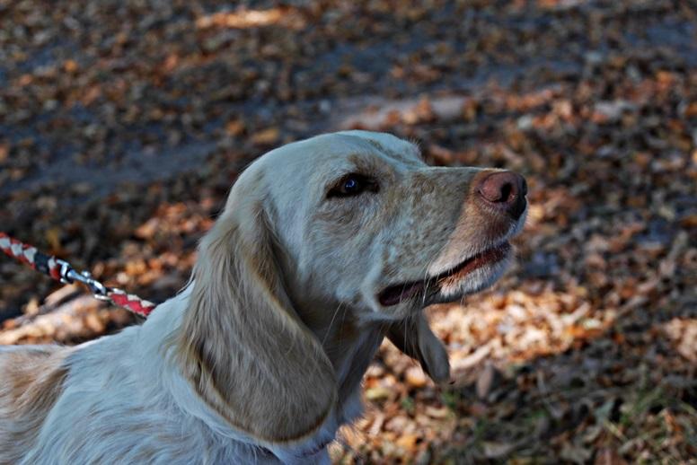 Portrait eines Hundes der uns auf der Wegschleife des Hugenotten- und Waldenserpfades bei Louisendorf in Nordhessen begleitet hat.