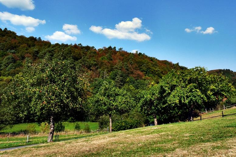 Blick auf Obstbäume im Lengeltal auf der Wegschleife des Hugenotten- und Waldenserpfaded bei Louisendorf in Nordhessen