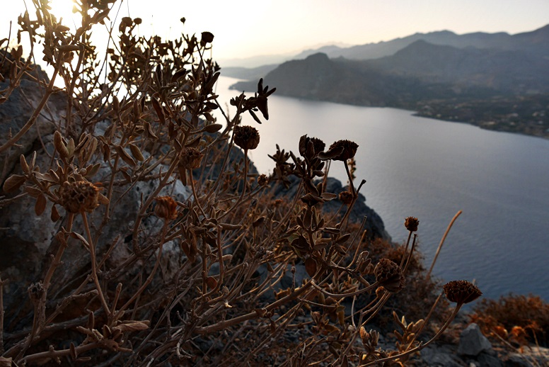 Wandern auf Kreta: Flora am Wegesrand am Hausberg von Plakias