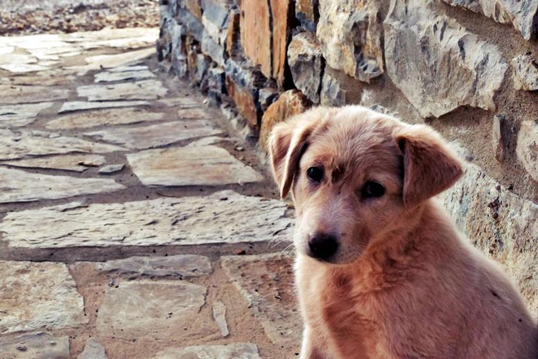 Hundewelpe auf Kreta