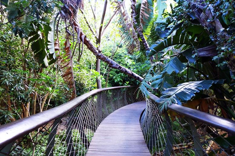 Sicht auf den Tree Walk im Botanischen Garten Kirstenbosch