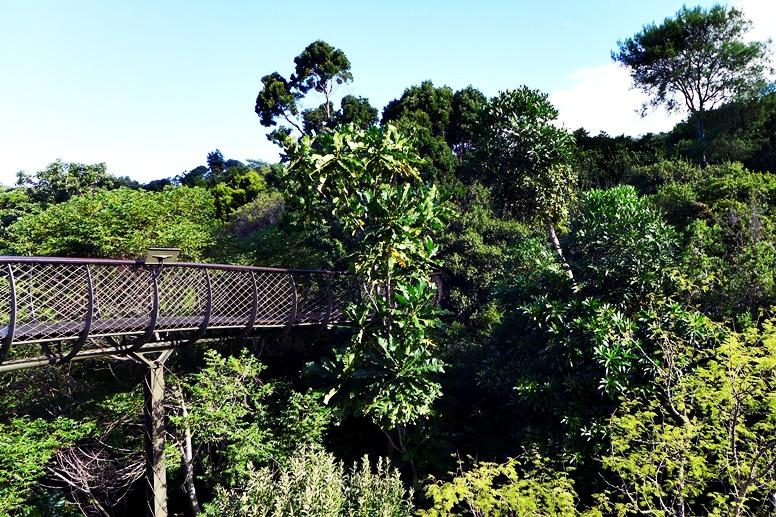 Blick von der Seite auf dem Baumwipfelpfad im Botanischen Garten Kirstenbosch