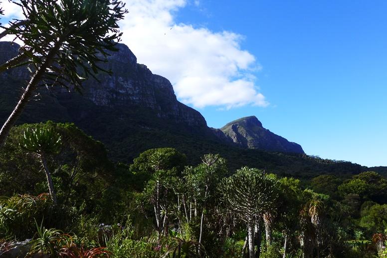 Panorama Blick im Botanischen Garten Kirstenbosch auf den Tafelberg