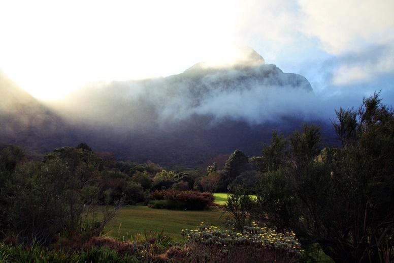 Nebel am Tafelberg im Botanischen Garten Kirstenbosch