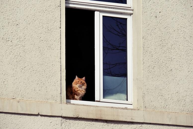Katze in einem Fenster in Leipzig
