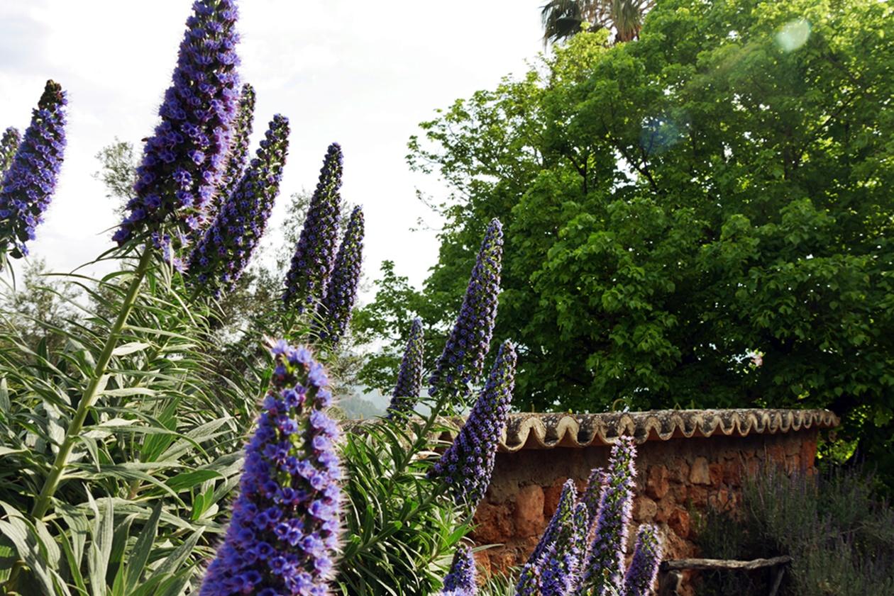 Blumen auf Mallorca