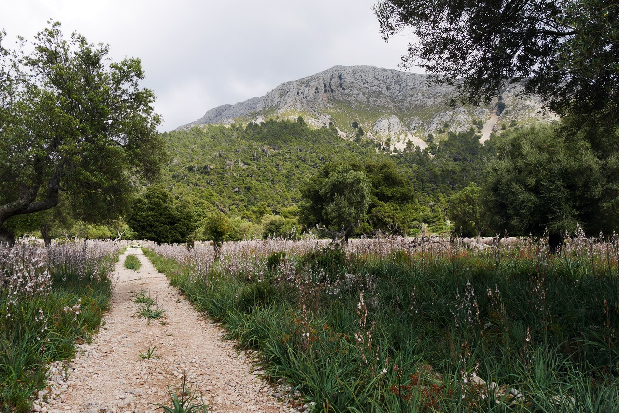 Wanderweg auf der 6.Etappe des GR221