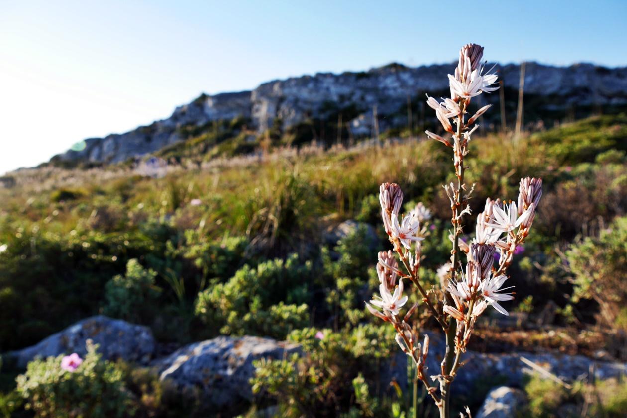 Blume im Sonnenaufgang auf Mallorca im Rahmen der Fotoparade Best of 1.Halbjahr 2017