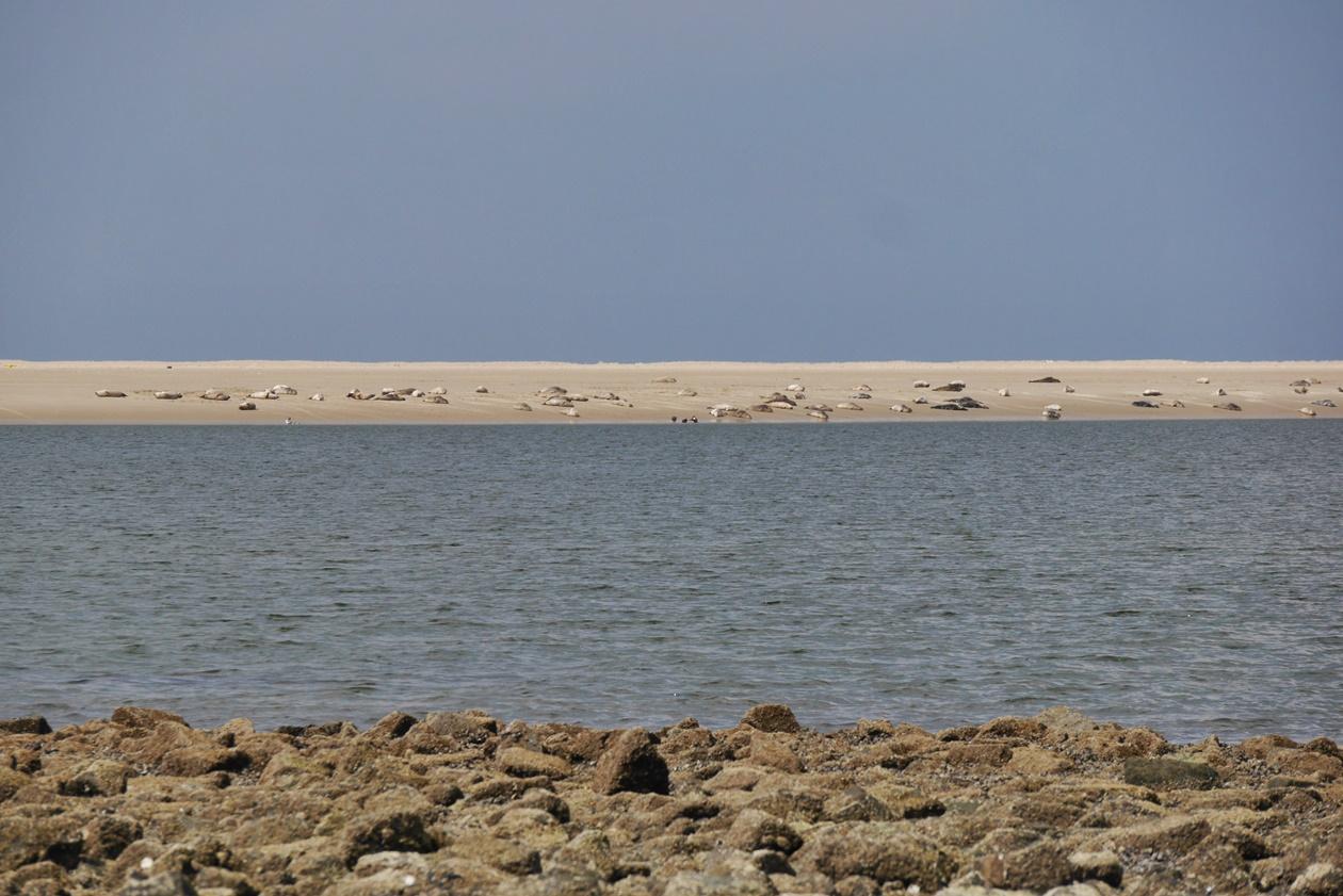 Seehundsbank vor Borkum beim Urlaub mit Oma
