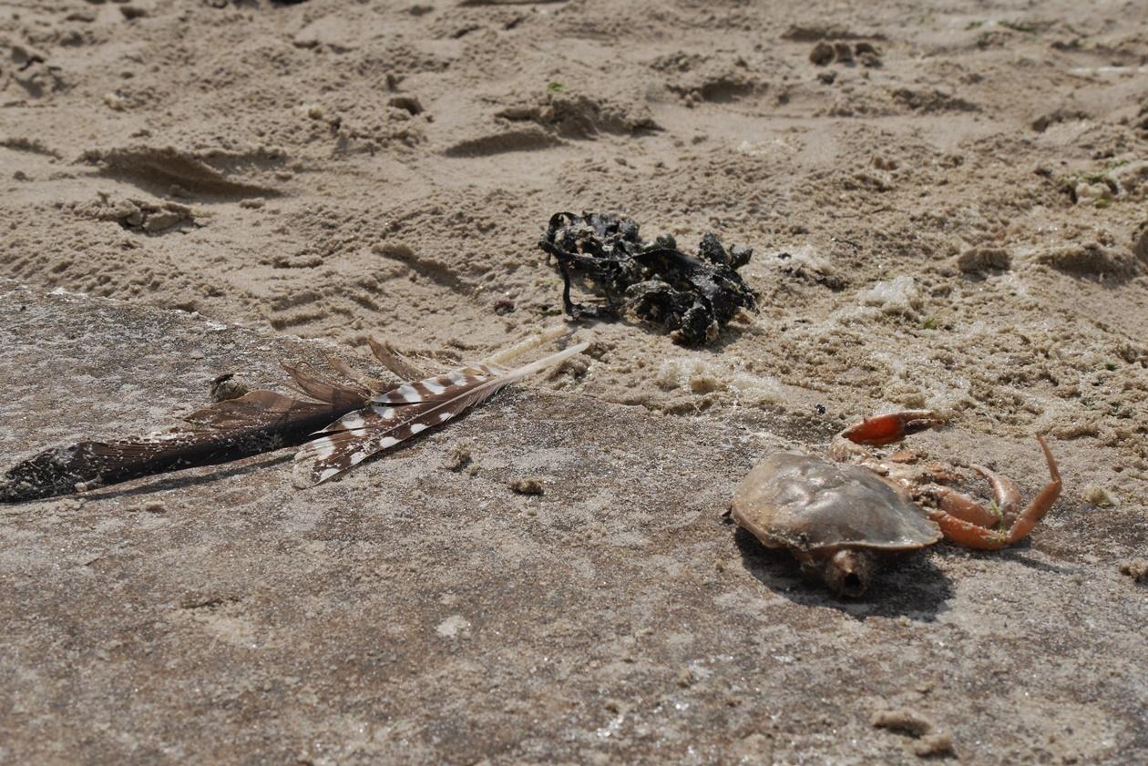 Strandfunde auf Borkum beim Urlaub mit Oma