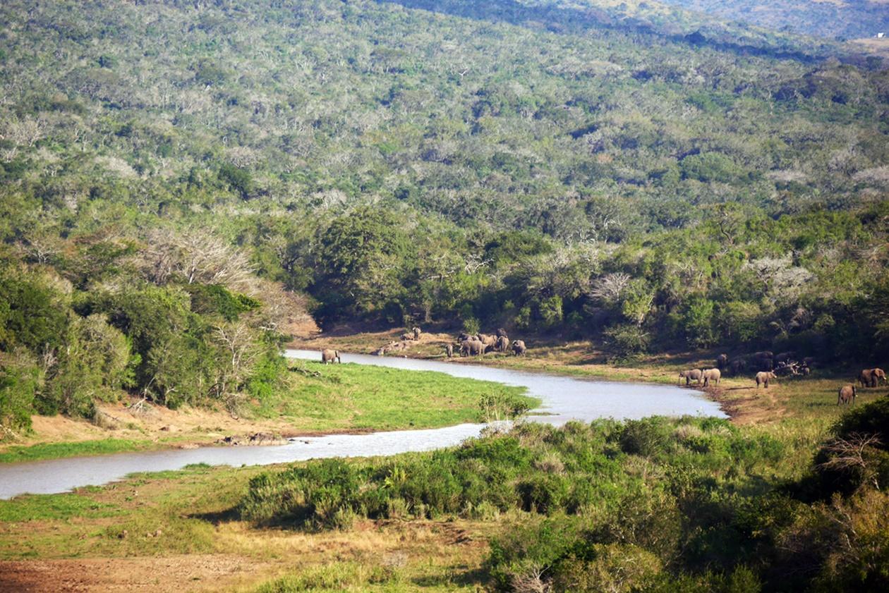 Große Elefantenherde an einem Fluss auf Safari im Hluhluwe Umfolozi National Park