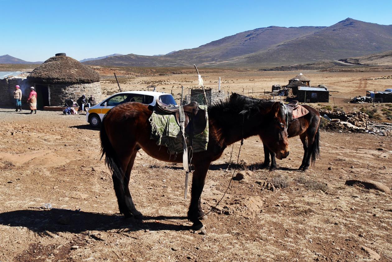 Basotho Pony am Sani Pass in Lesotho