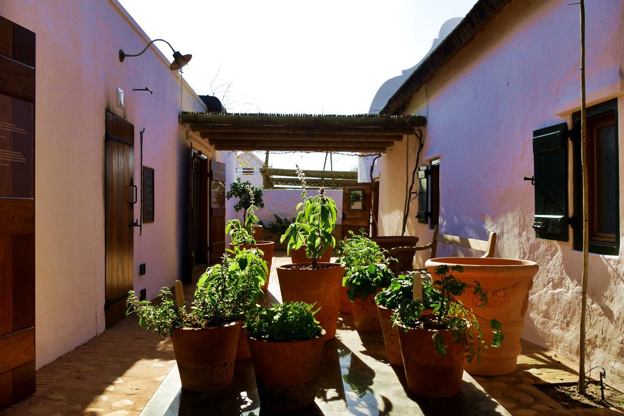 Kräuter in Babylonstoren auf unserem Wochenendausflug von Kapstadt