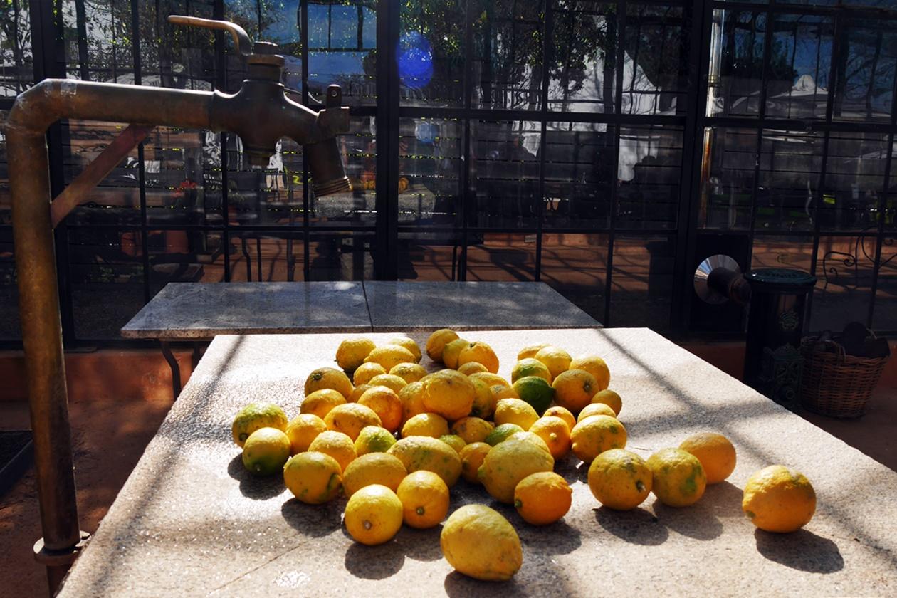 Zitronen in Bayblonstoren auf unserem Wochenendausflug von Kapstadt