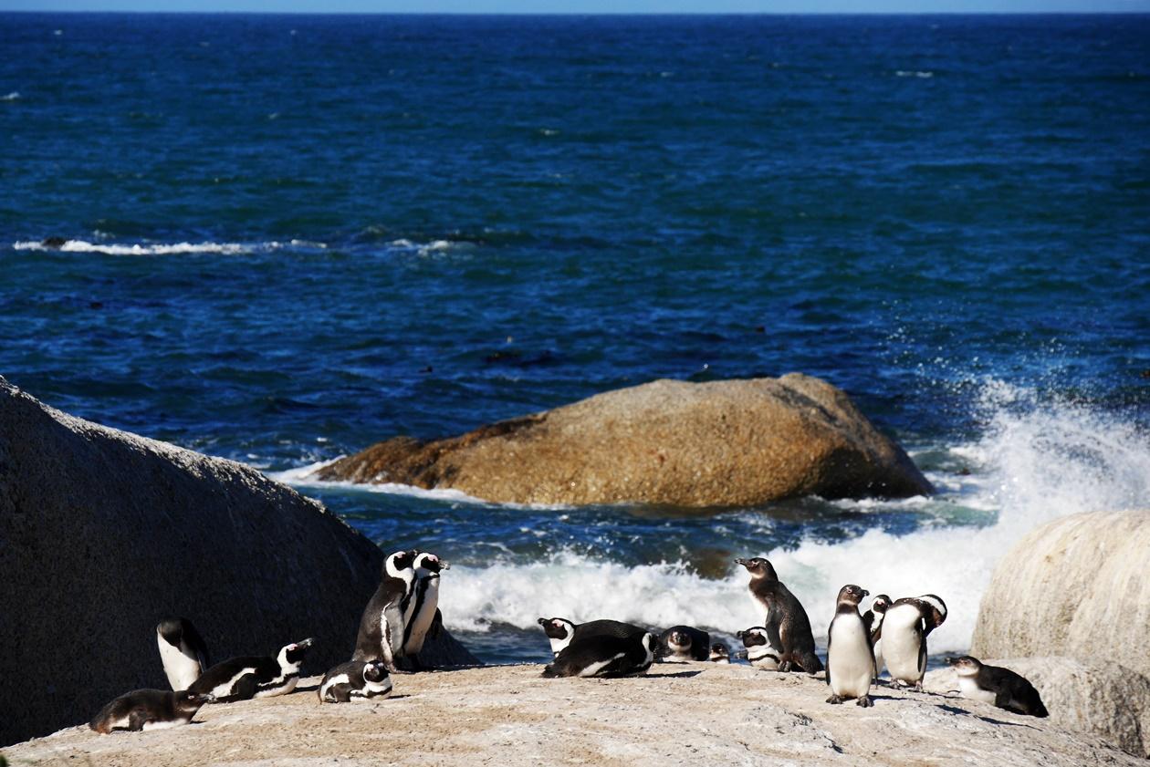 Kalk Bay und Simons Town sind perfekt für einen Ausflug am Wochenende in Kapstadt