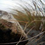 Strandspaziergang, Bernstein und Sanddorntorte: Hiddensee im Winter